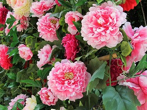 牡丹の造花