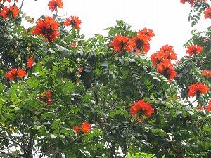 熱帯的木の花