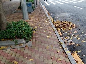 道端の落ち葉