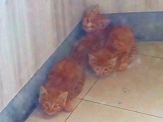 子猫が三匹