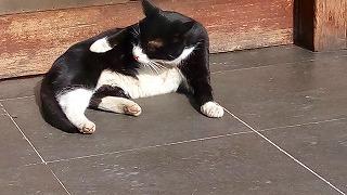 猫歩きシリーズ1