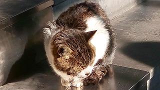猫歩きシリーズ2
