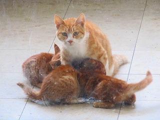 乳をやる母猫