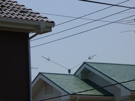大屋根の向こうから見たところ