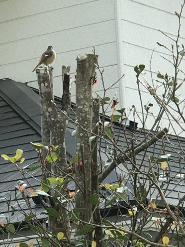 樹上の野鳥