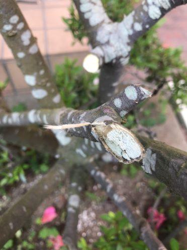 枝の切断面の写真